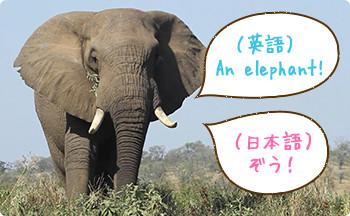 英語の動物